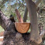 Olivenholz Möser aus Spanien von Mi Olivar